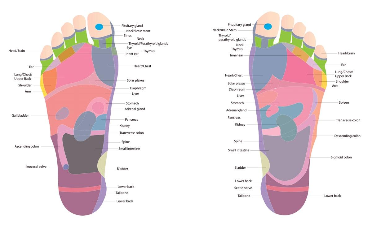 Foot Reflexology Chart / Diagram