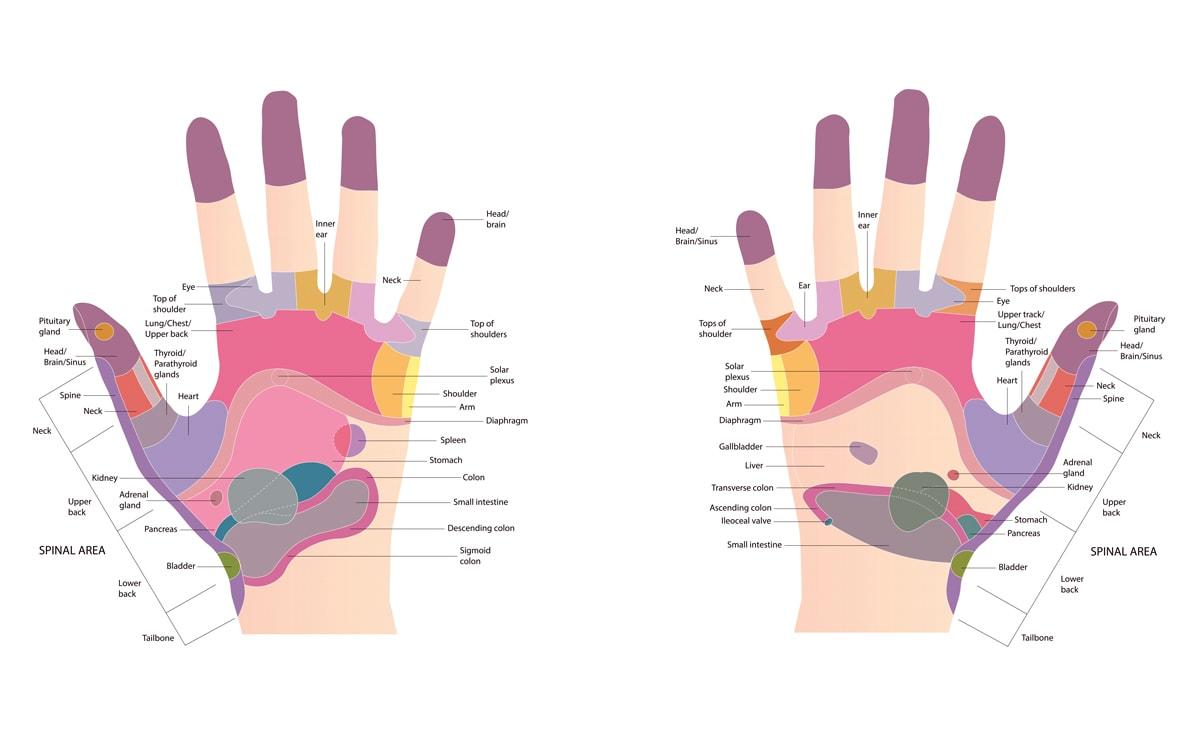 Hand Reflexology Chart / Diagram